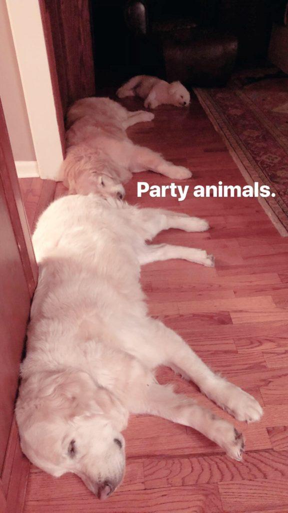 PartyAnimals