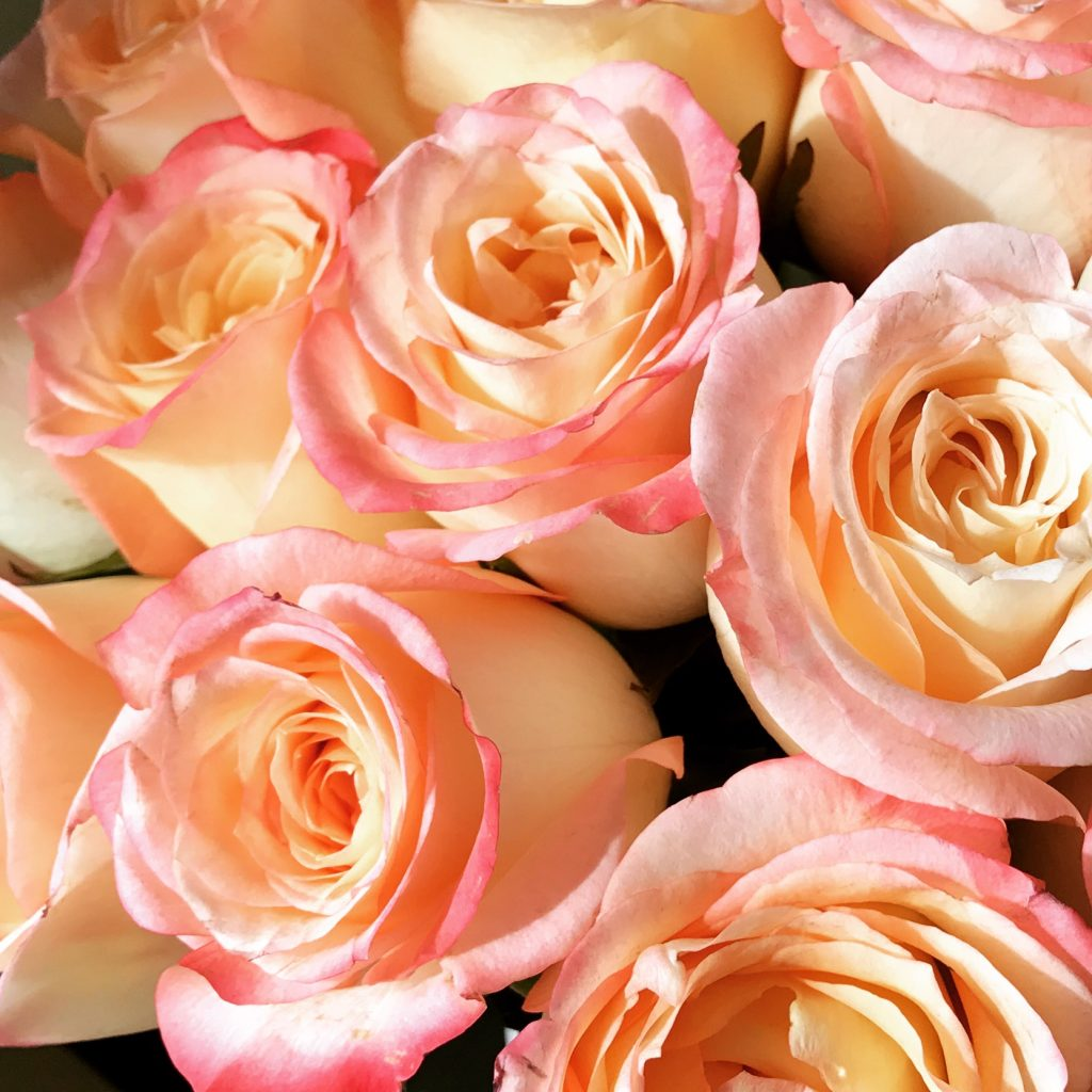 yellow-pink-roses